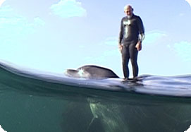Rod Bennett surfing with his favourite dolphin